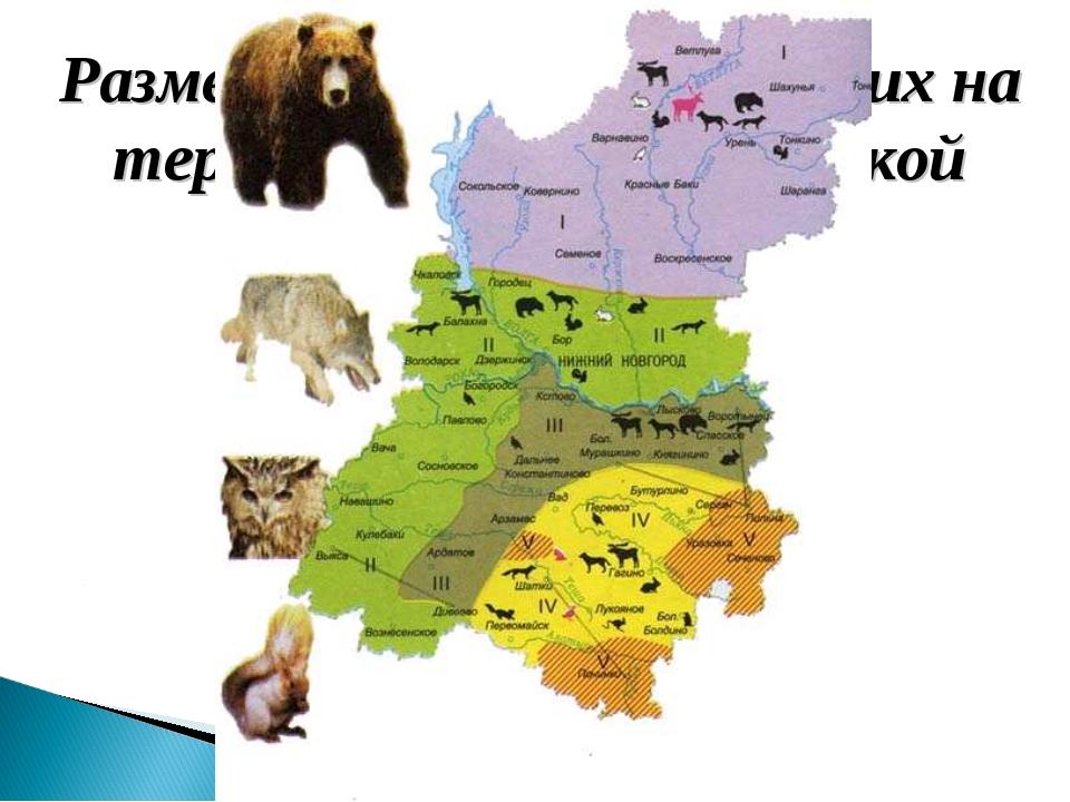 Размещение млекопитающих на территории Нижегородской области
