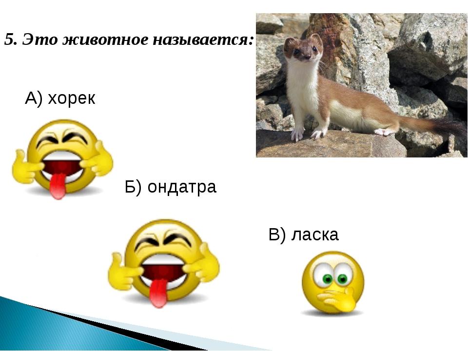 5. Это животное называется: А) хорек Б) ондатра В) ласка