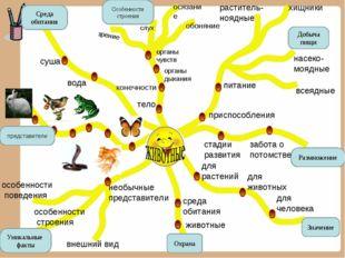 Среда обитания Особенности строения Добыча пищи Размножение Значение Уникальн