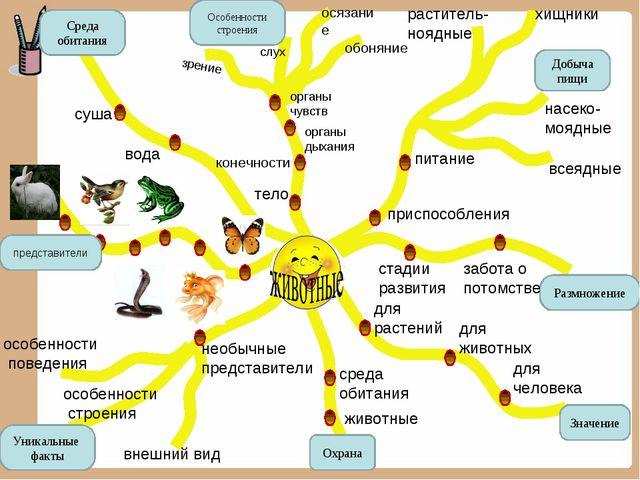 Среда обитания Особенности строения Добыча пищи Размножение Значение Уникальн...
