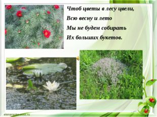 Чтоб цветы в лесу цвели, Всю весну и лето Мы не будем собирать Их больших бук