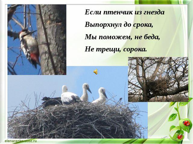 Если птенчик из гнезда Выпорхнул до срока, Мы поможем, не беда, Не трещи, сор...