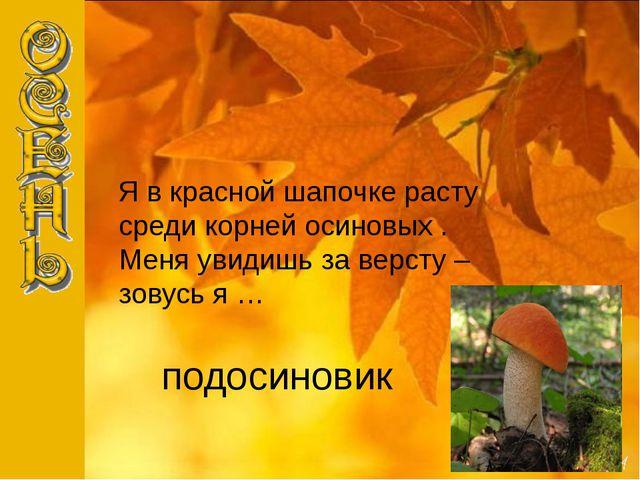 подосиновик Я в красной шапочке расту среди корней осиновых . Меня увидишь за...