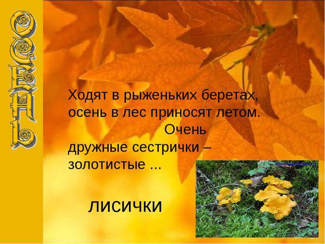 лисички Ходят в рыженьких беретах, осень в лес приносят летом. Очень дружные...