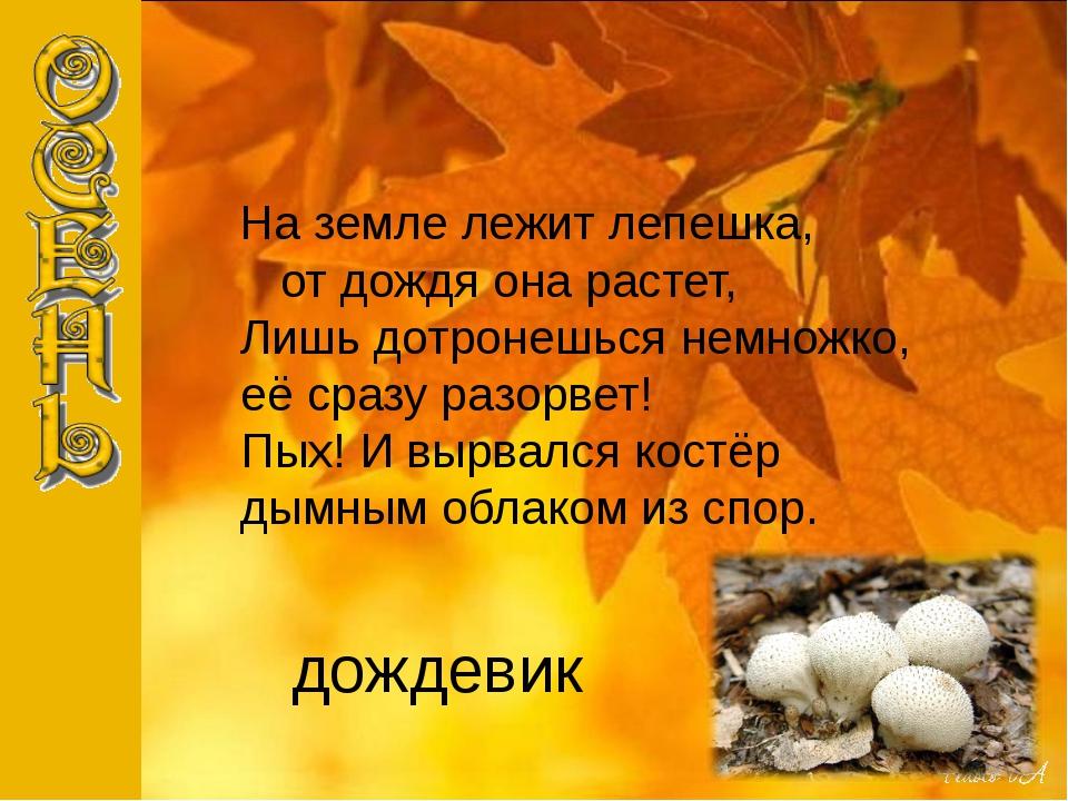 дождевик На земле лежит лепешка, от дождя она растет, Лишь дотронешься немнож...