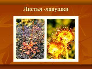 Листья -ловушки
