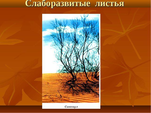 Слаборазвитые листья