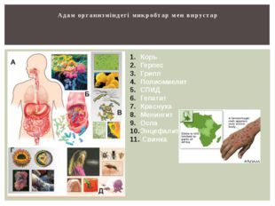 Адам организміндегі микробтар мен вирустар Корь Герпес Грипп Полиомиелит СПИД