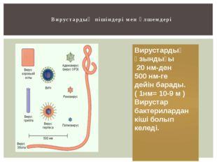 Вирустардың пішіндері мен өлшемдері Вирустардың ұзындығы 20 нм-ден 500 нм-ге