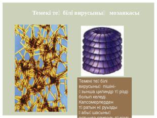 Темекі теңбілі вирусының мозаикасы Темекі теңбілі вирусының пішіні- ұзынша ци