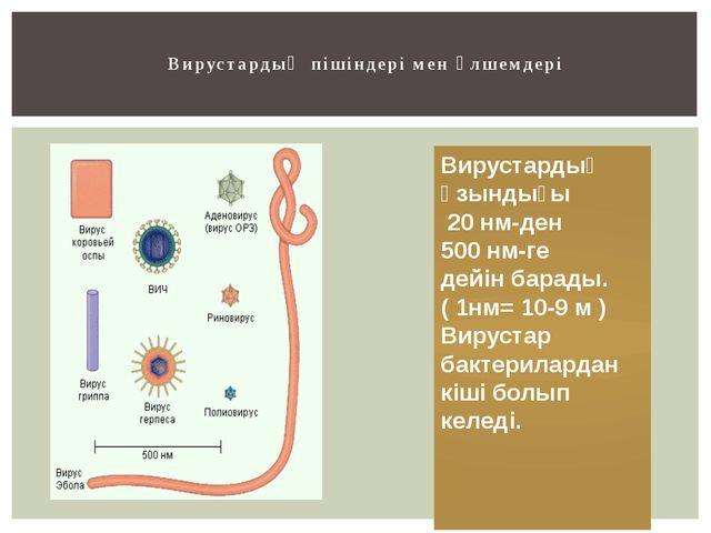 Вирустардың пішіндері мен өлшемдері Вирустардың ұзындығы 20 нм-ден 500 нм-ге...