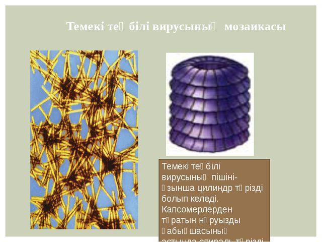 Темекі теңбілі вирусының мозаикасы Темекі теңбілі вирусының пішіні- ұзынша ци...