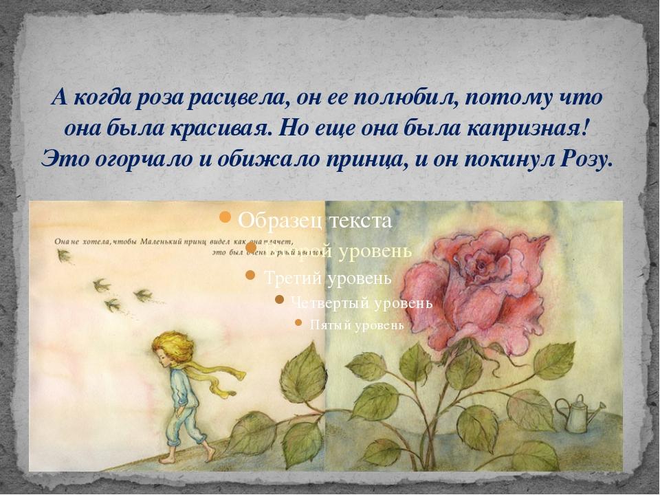 А когда роза расцвела, он ее полюбил, потому что она была красивая. Но еще он...