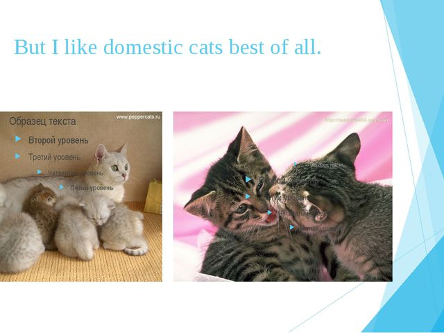 But I like domestic cats best of all.
