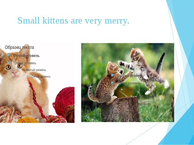 Small kittens are very merry.