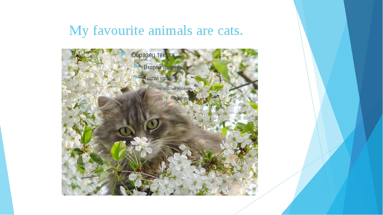My favourite animals are cats.