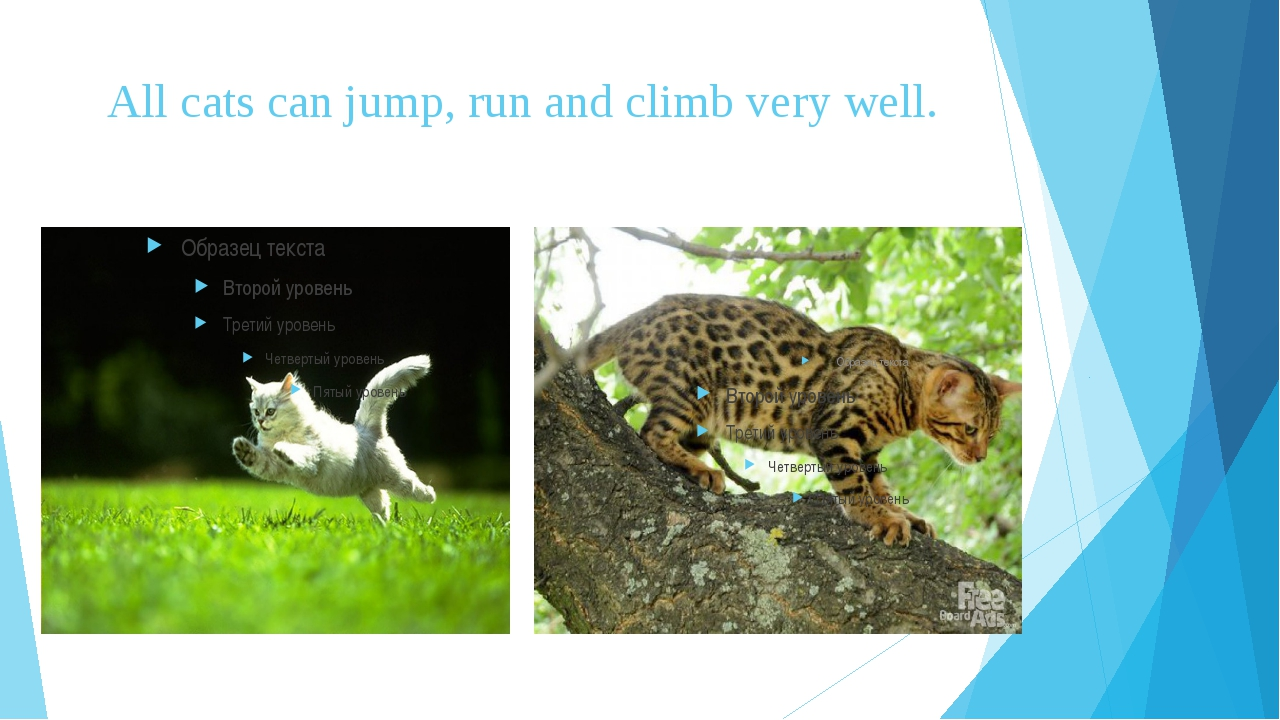 All cats can jump, run and climb very well.