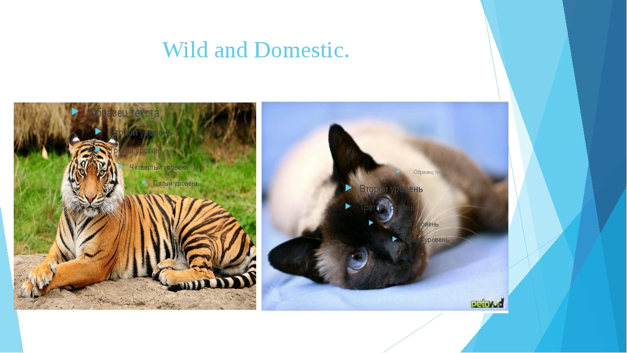 Wild and Domestic.