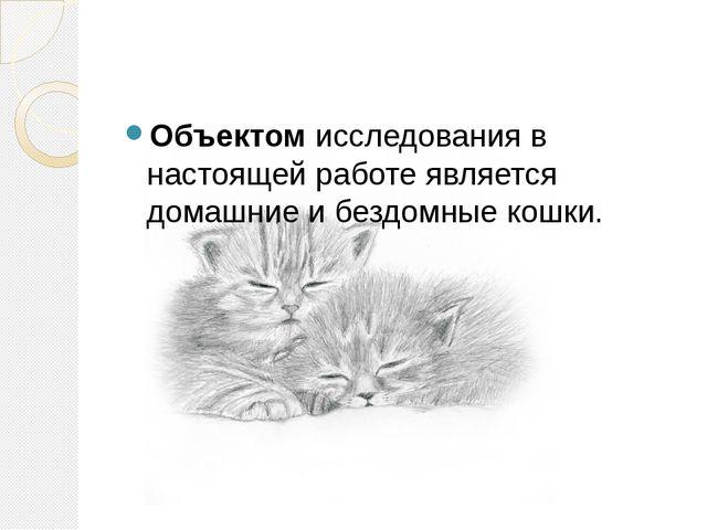 Объектом исследования в настоящей работе является домашние и бездомные кошки.
