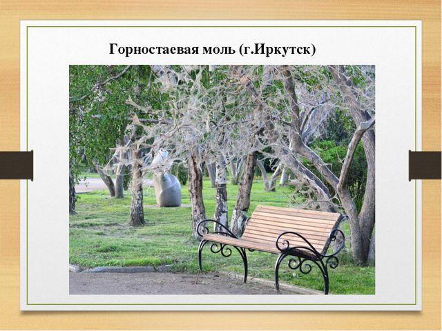 Горностаевая моль (г.Иркутск)
