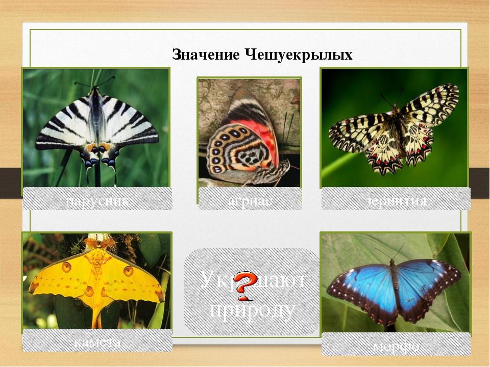 Украшают природу парусник зеринтия агриас морфо камета Значение Чешуекрылых В...