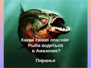 Какая самая опасная Рыба водиться в Амазонке? Пиранья