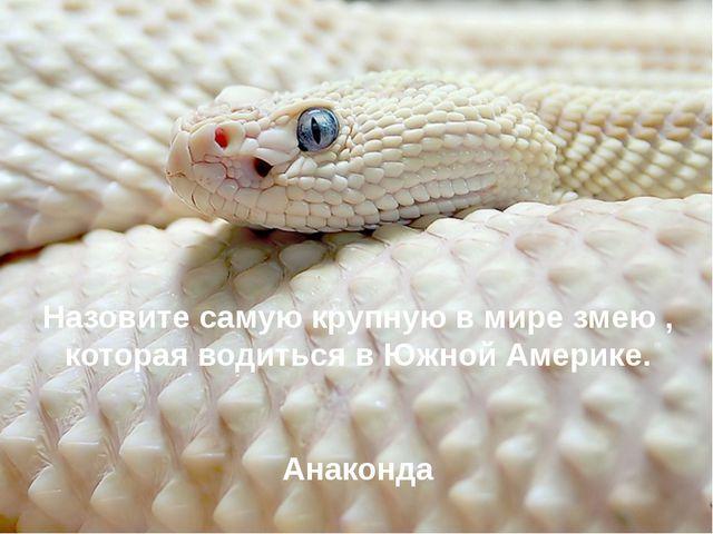 Назовите самую крупную в мире змею , которая водиться в Южной Америке. Анако...