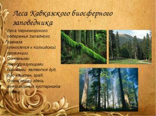 Леса Кавказского биосферного заповедника Леса Черноморского побережья Западно