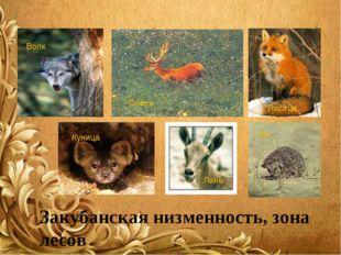 Волк Олень Еж Лань Куница Закубанская низменность, зона лесов Лисица