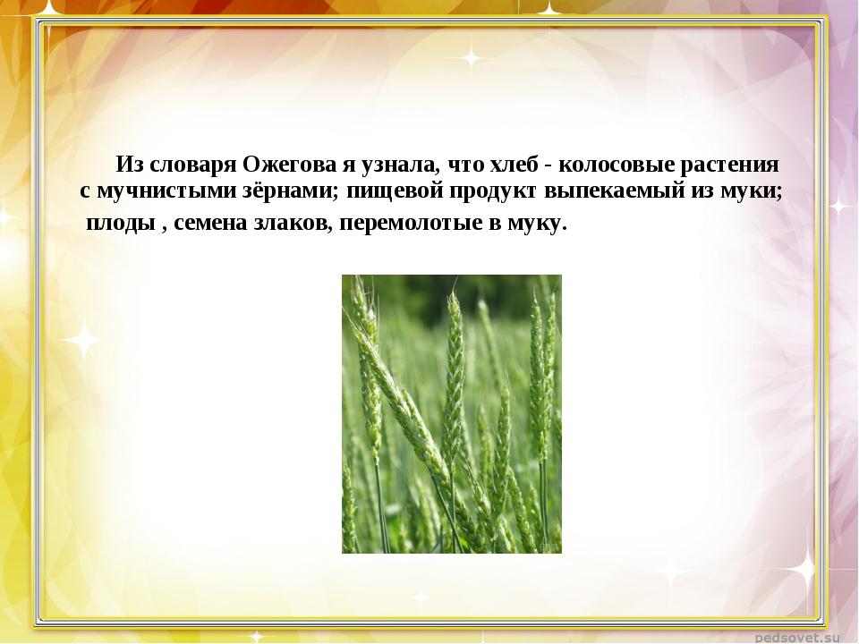 Из словаря Ожегова я узнала, что хлеб - колосовые растения с мучнистыми зёрн...