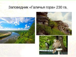 Заповедник «Галичья гора» 230 га.