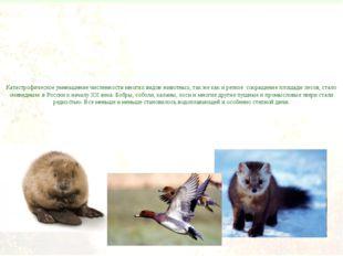 Катастрофическое уменьшение численности многих видов животных, так же как и р