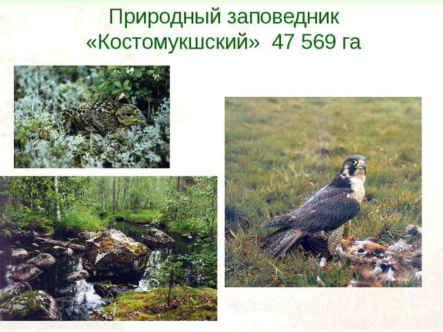 Природный заповедник «Костомукшский» 47 569 га