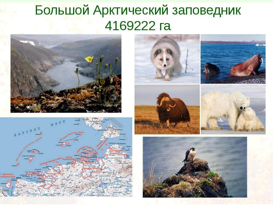 Большой Арктический заповедник 4169222га
