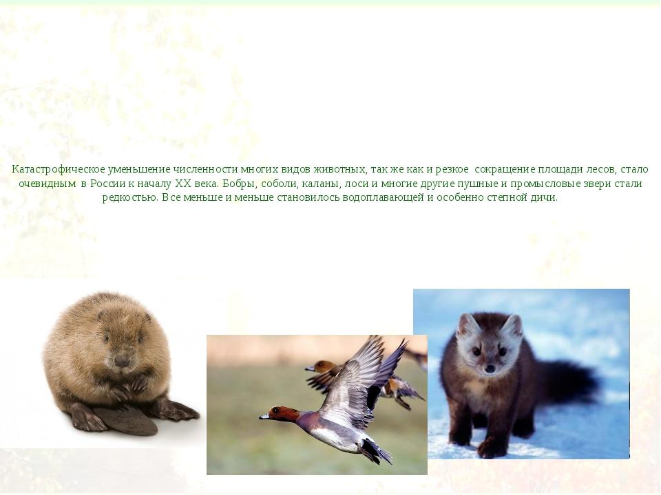 Катастрофическое уменьшение численности многих видов животных, так же как и р...