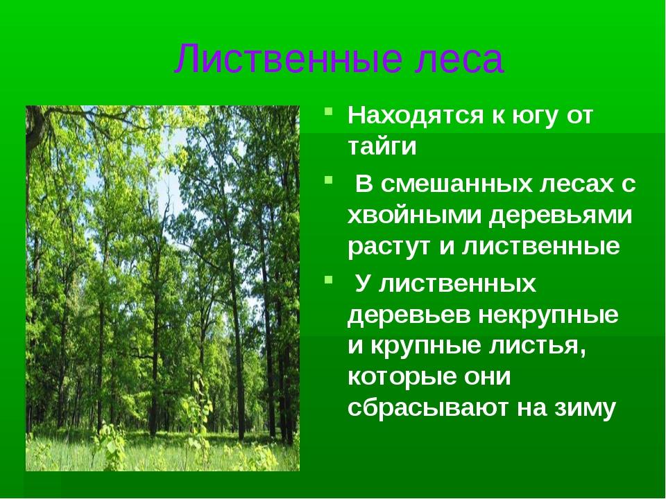 Лиственные леса Находятся к югу от тайги В смешанных лесах с хвойными деревья...