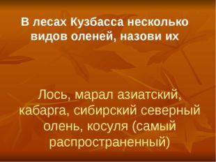 В лесах Кузбасса несколько видов оленей, назови их Лось, марал азиатский, каб