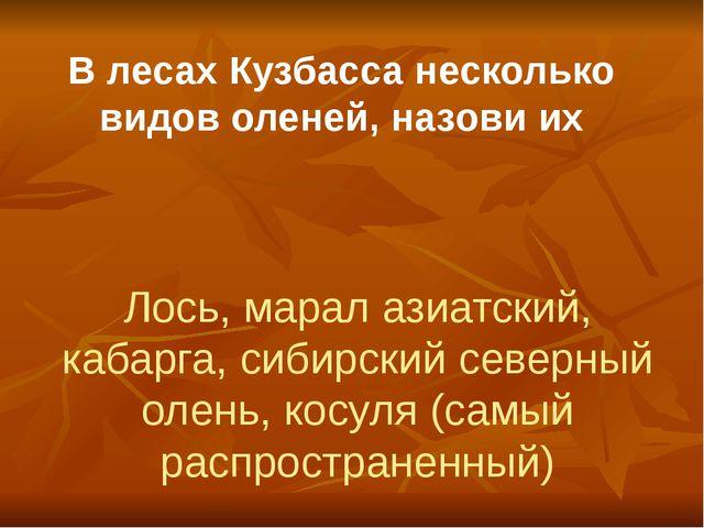 В лесах Кузбасса несколько видов оленей, назови их Лось, марал азиатский, каб...