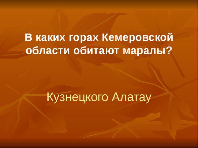 В каких горах Кемеровской области обитают маралы? Кузнецкого Алатау