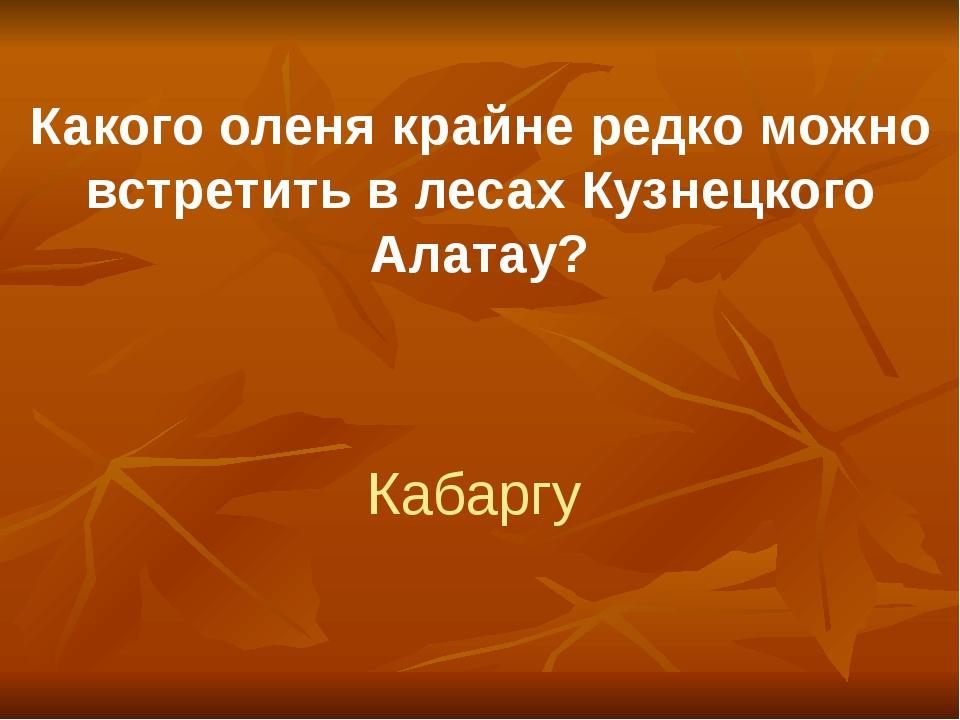 Какого оленя крайне редко можно встретить в лесах Кузнецкого Алатау? Кабаргу