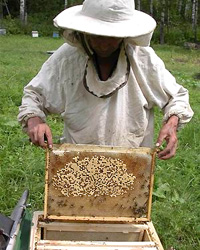 Пчеловод (Пасечник)