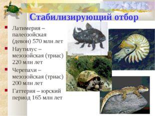 Стабилизирующий отбор Латимерия – палеозойская (девон) 570 млн лет Наутилус –