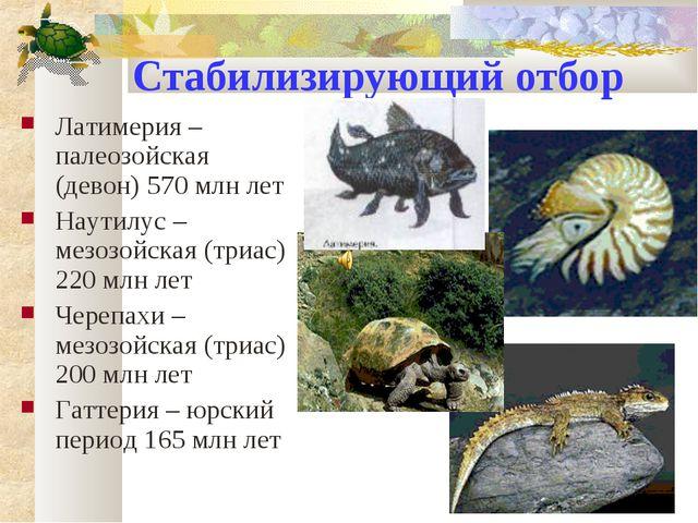 Стабилизирующий отбор Латимерия – палеозойская (девон) 570 млн лет Наутилус –...