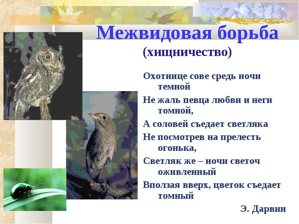 Межвидовая борьба (хищничество) Охотнице сове средь ночи темной Не жаль певца...