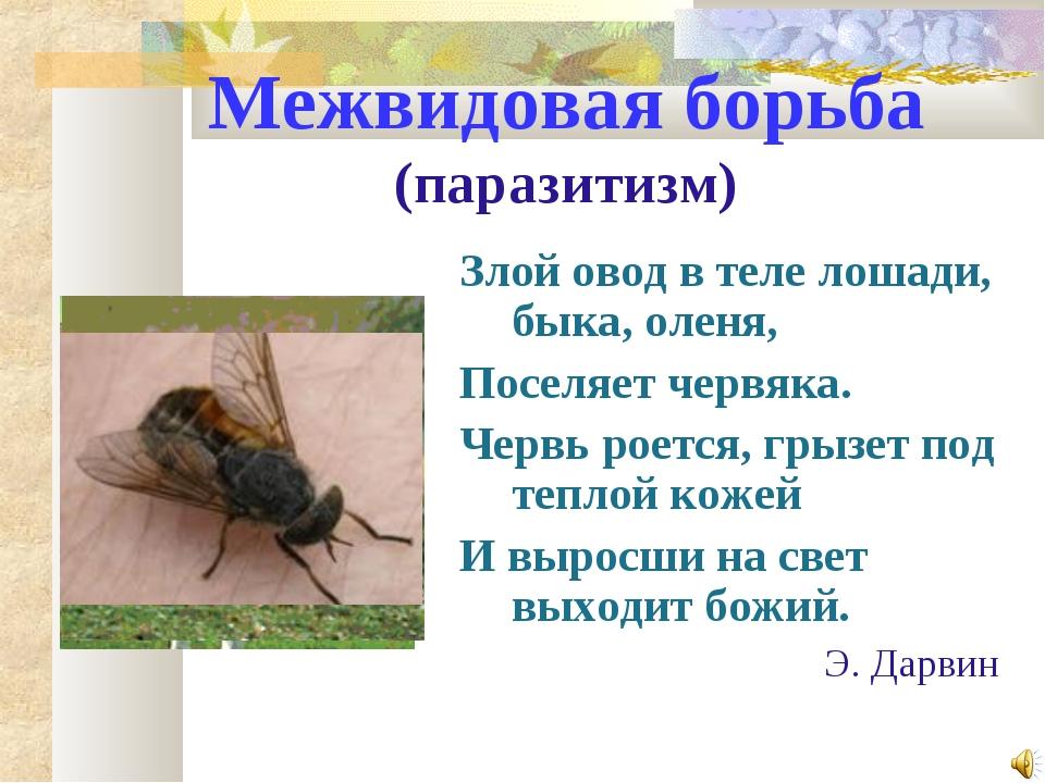 Межвидовая борьба (паразитизм) Злой овод в теле лошади, быка, оленя, Поселяет...
