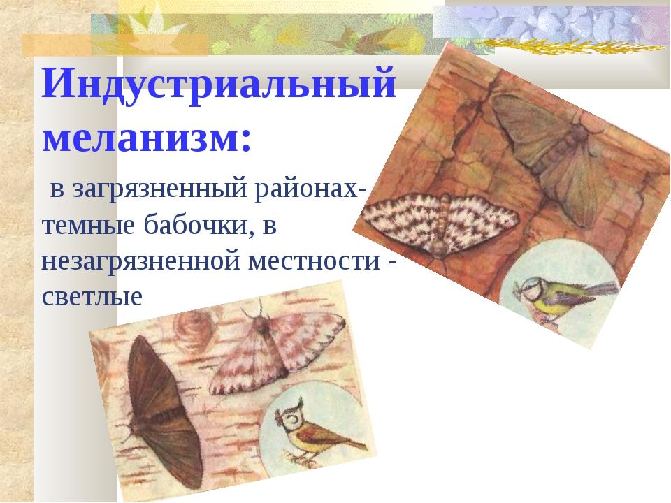 Индустриальный меланизм: в загрязненный районах- темные бабочки, в незагрязне...