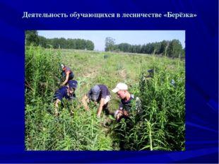 Деятельность обучающихся в лесничестве «Берёзка»