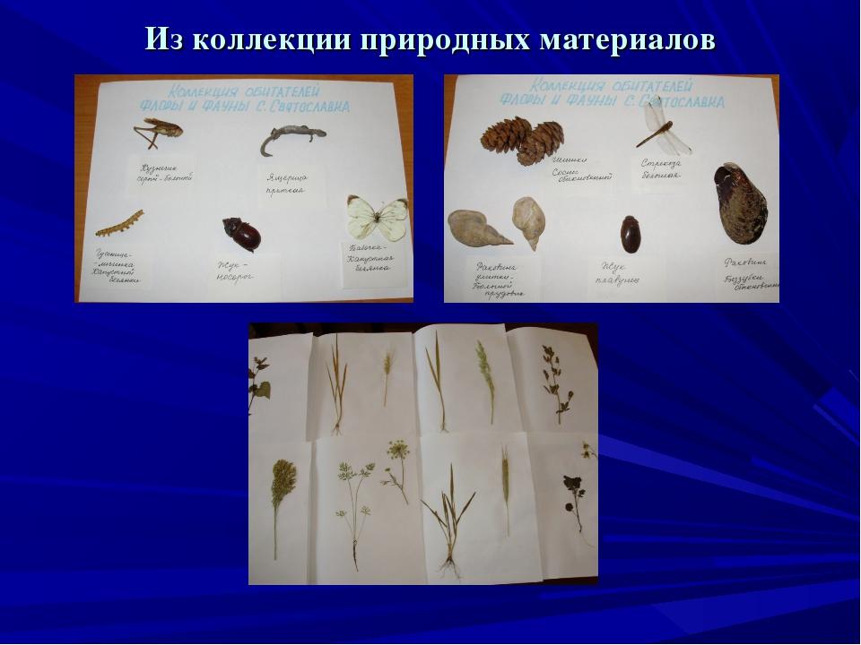 Из коллекции природных материалов