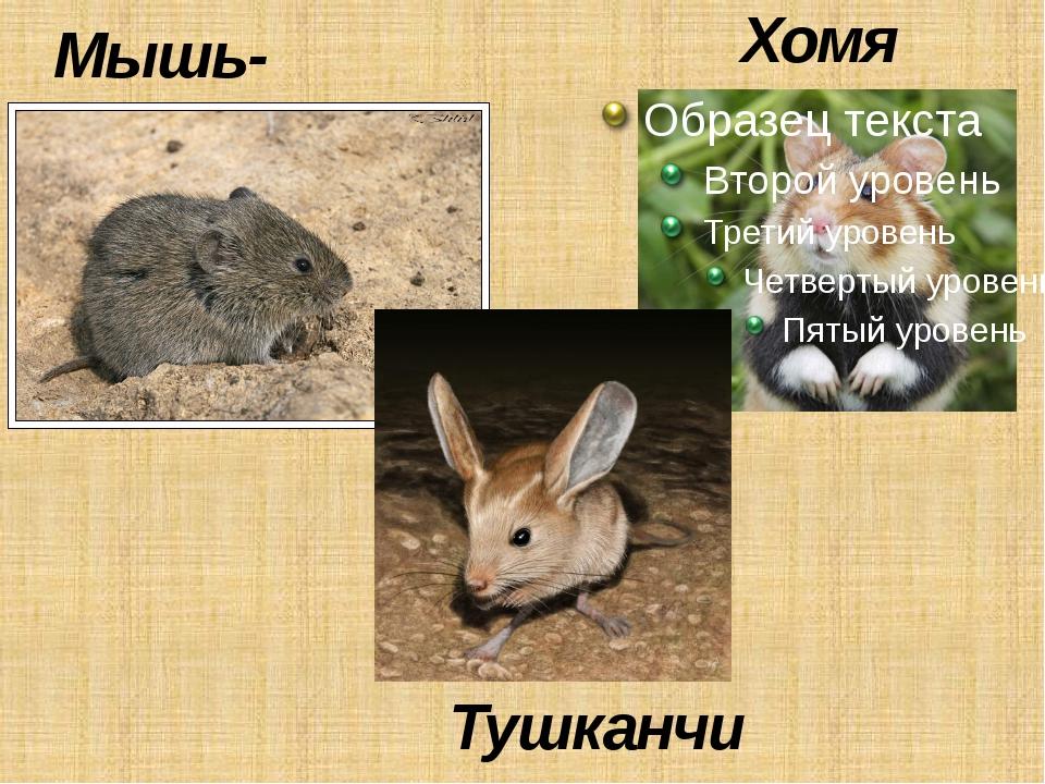 Мышь-полёвка Тушканчик Хомяк