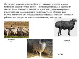 Достаточно многочисленными были и стада овец, ценимых за мясо, молоко и в осо
